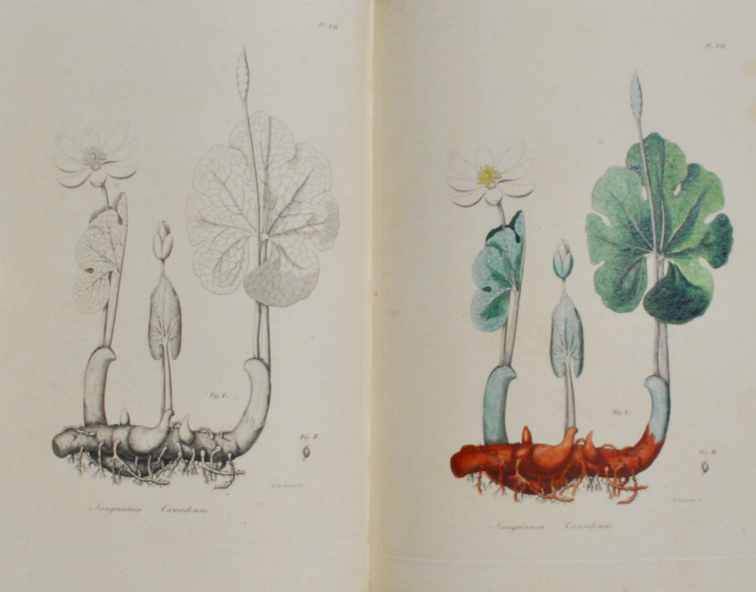 Image for Jacob Bigelow's American Medical Botany, 1817-1821.  An examination of the origin, printing, binding and distribution of America?s first color plate book. With special emphasis on the manner of making and printing its colored plates.